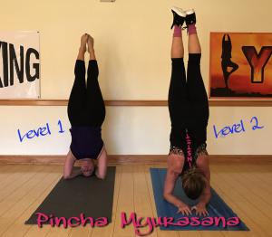 yoga_picture